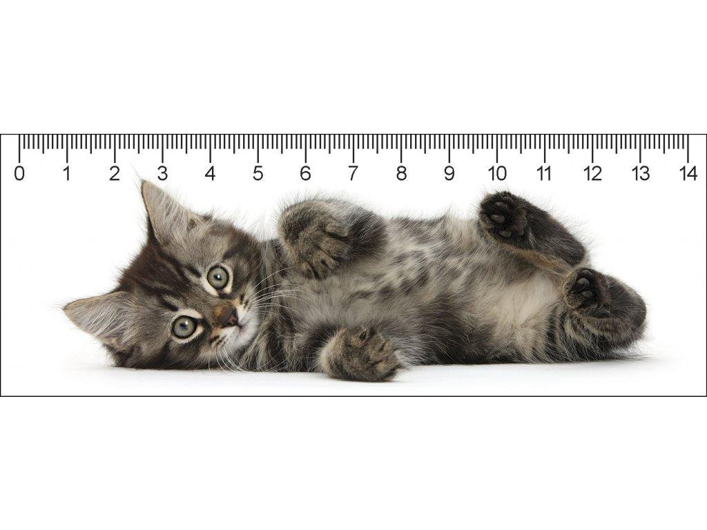 Tabby kitty deep 3D