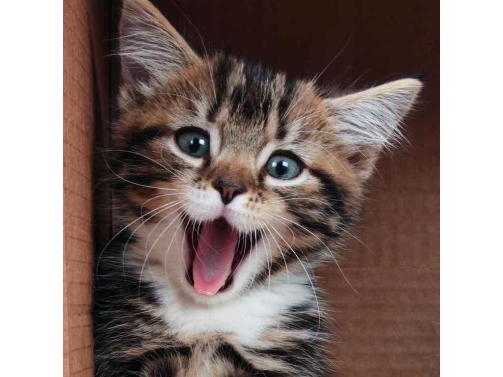 Pohlednice smějící se kotě 3D