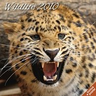 Wildlife Petr Slavík 2010 - nástěnný kalendář