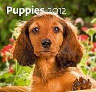Kalendář nástěnný 2012 - Puppies