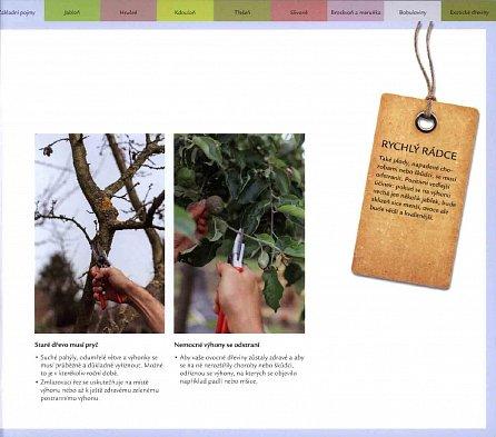 Náhled Řez ovocných stromů a keřů - Rychlý rádce