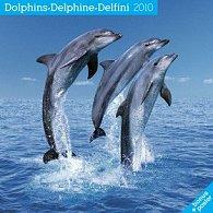 Delfíni 2010 - nástěnný kalendář