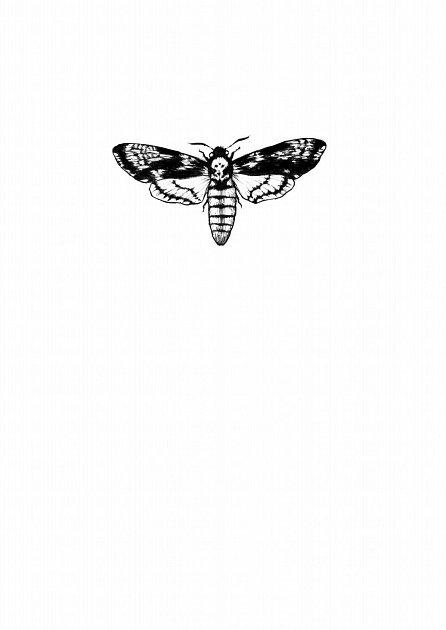 Náhled Noční motýl