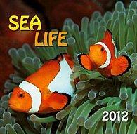 Kalendář 2012 - Sea life - nástěnný