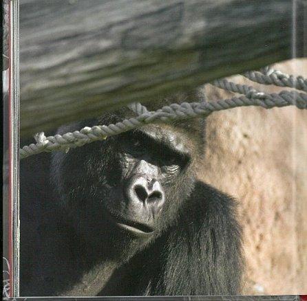 Náhled Moja - příběh gorilí slečny
