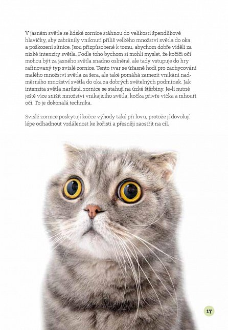 Náhled Inteligentní kočka