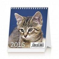 Kalendář stolní 2016 - Mini Kittens