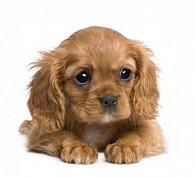 Pohlednice 3D čtverec štěně hnědé