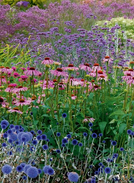 Náhled Zahradní rostliny