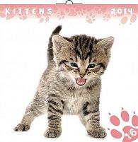 Kalendář 2014 - Koťata - nástěnný poznámkový (ČES, SLO, MAĎ, POL, RUS, ANG)