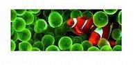 Záložka 3D rybky