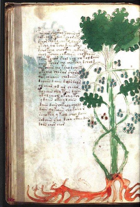 Náhled Voynichův rukopis - Nejzáhadnější kniha světa