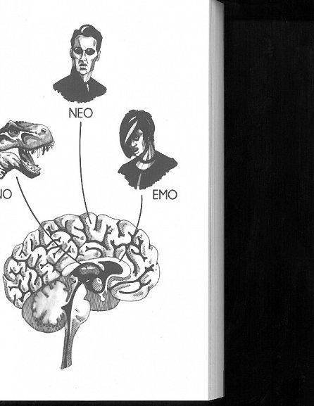 Náhled Trhák aneb 21 kapitol o vašem mozku