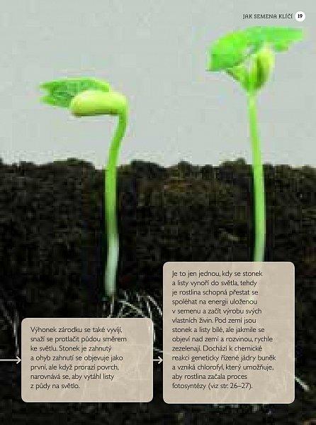 Náhled Pěstování ze semen
