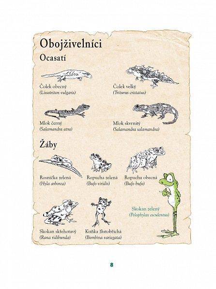 Náhled Žabák Jeroným - Vynálezce bez bázně a hany