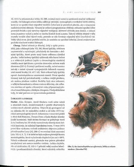 Náhled Předkové - Evoluce člověka