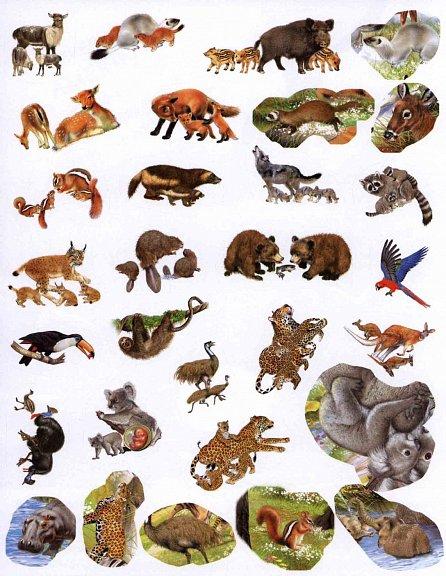 Náhled Zvířátka a jejich mláďátka - Objevuj a nalep