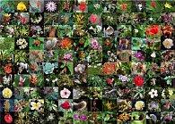1000 d. Květy