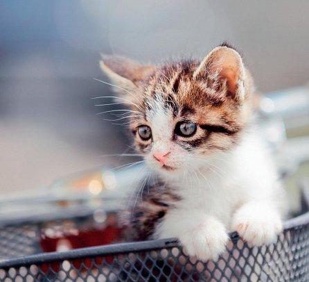 Náhled Kočky nejsou pro kočku