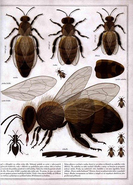 Náhled Včely