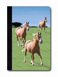 Zápisník - Úžaska - Koně