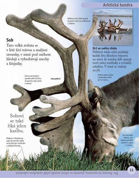 Náhled První encyklopedie přírody