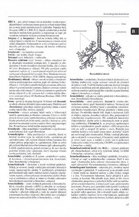 Náhled Praktický slovník medicíny