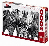 Zebry - puzzle 1000 dílků