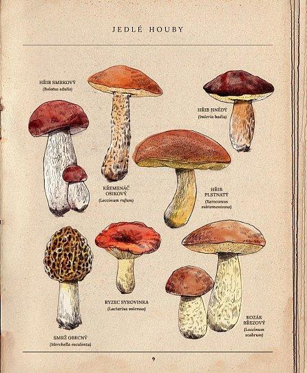 Náhled Houby - Podivuhodné skutečnosti ze života hub, o kterých jste neměli tušení