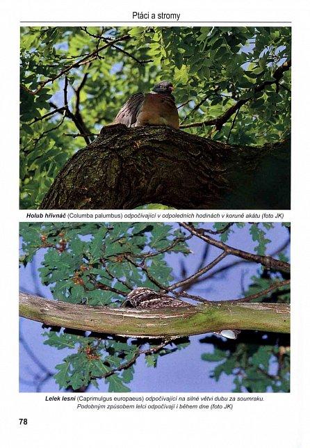 Náhled Ptáci a stromy