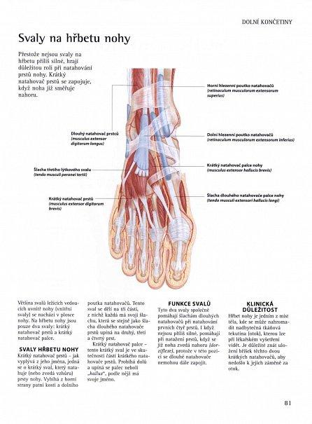Náhled Jak funguje lidská kostra? - Anatomický ilustrovaný průvodce