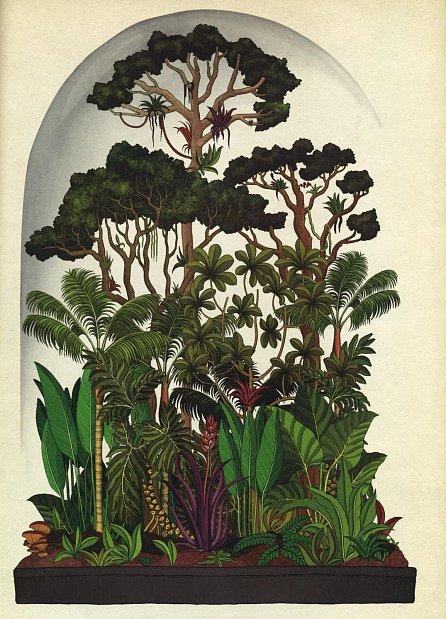 Náhled Botanicum