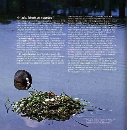 Náhled Skrytá tvář přírody - Záhady živočišné i rostlinné říše
