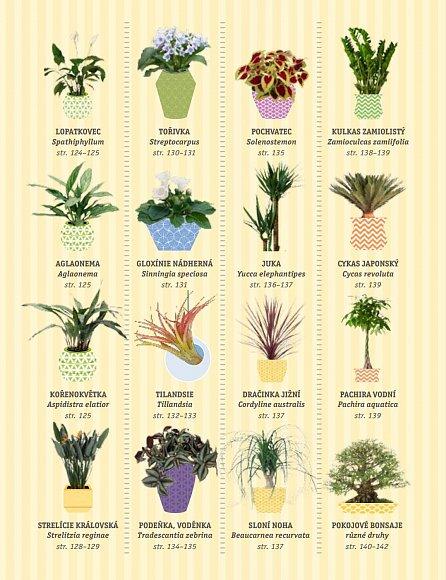 Náhled Zdravé pokojové rostliny