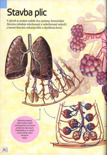 Náhled Lidské tělo - Encyklopedie nejen pro školáky
