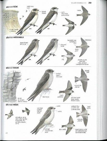 Náhled Ptáci Evropy, Severní Afriky...- 2. vydá