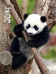 Veselá zvířátka - nástěnný kalendář 2014