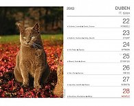 Kalendář 2013 stolní - Kočky se jmény koček Praktik, 16,5 x 13 cm