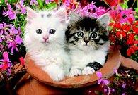 Pohlednice 3D koťata