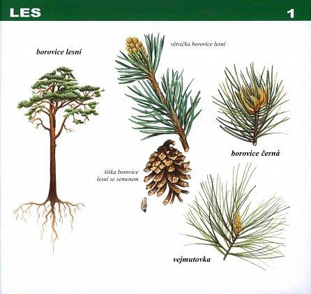 Náhled Rostliny naší přírody – manipulační atlas