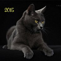 Kočky - nástěnný kalendář 2015