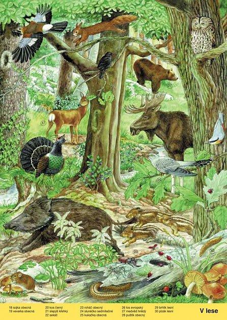 Náhled Co se děje v přírodě