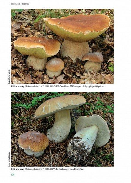 Náhled Hřibovité houby Evropy
