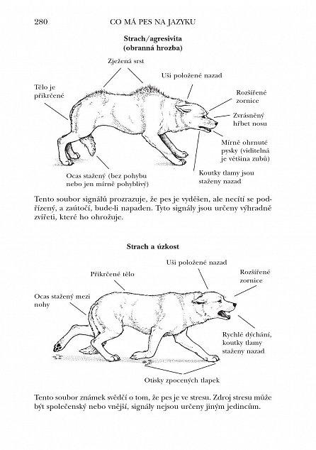 Náhled Co má pes na jazyku - Jak porozumět psí řeči
