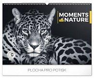 Kalendář nástěnný 2020 - Momenty v přírodě, 48 × 33 cm