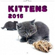 Kalendář nástěnný 2016 - Koťata, poznámkový  30 x 30 cm