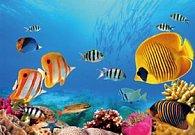 Pohlednice 3D ryby moře