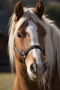 Pohlednice 3D kůň hnědobílý