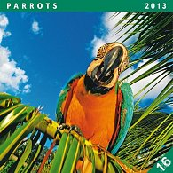 Kalendář 2013 poznámkový - Papoušci, 30 x 60 cm