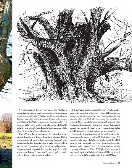 Náhled Nejmohutnější stromy naší země